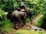 Thajsko, Malajsie 2001